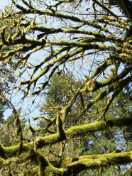 pic of tree moss
